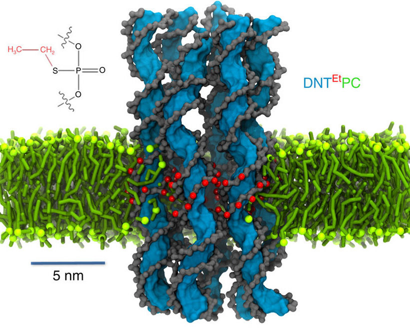 DNA origami pore in bilayer